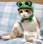 cat-eaten-by-frog